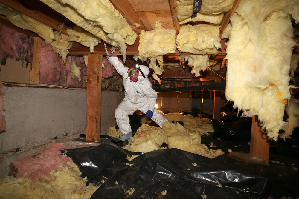 crawl space specialist services