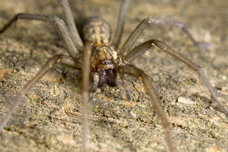 eliminating spiders, pest control