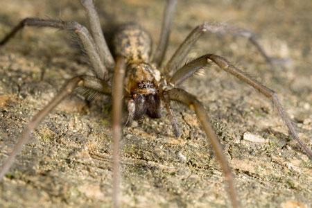 eliminating spiders, pest control