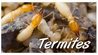 pest control termites