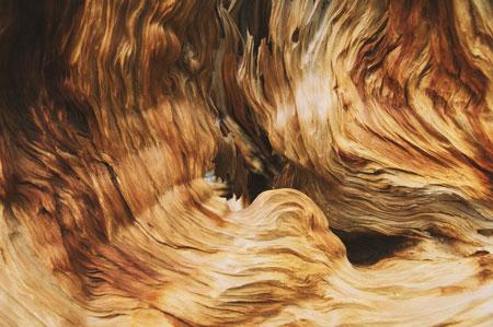 termites, rotting wood, sagging boards