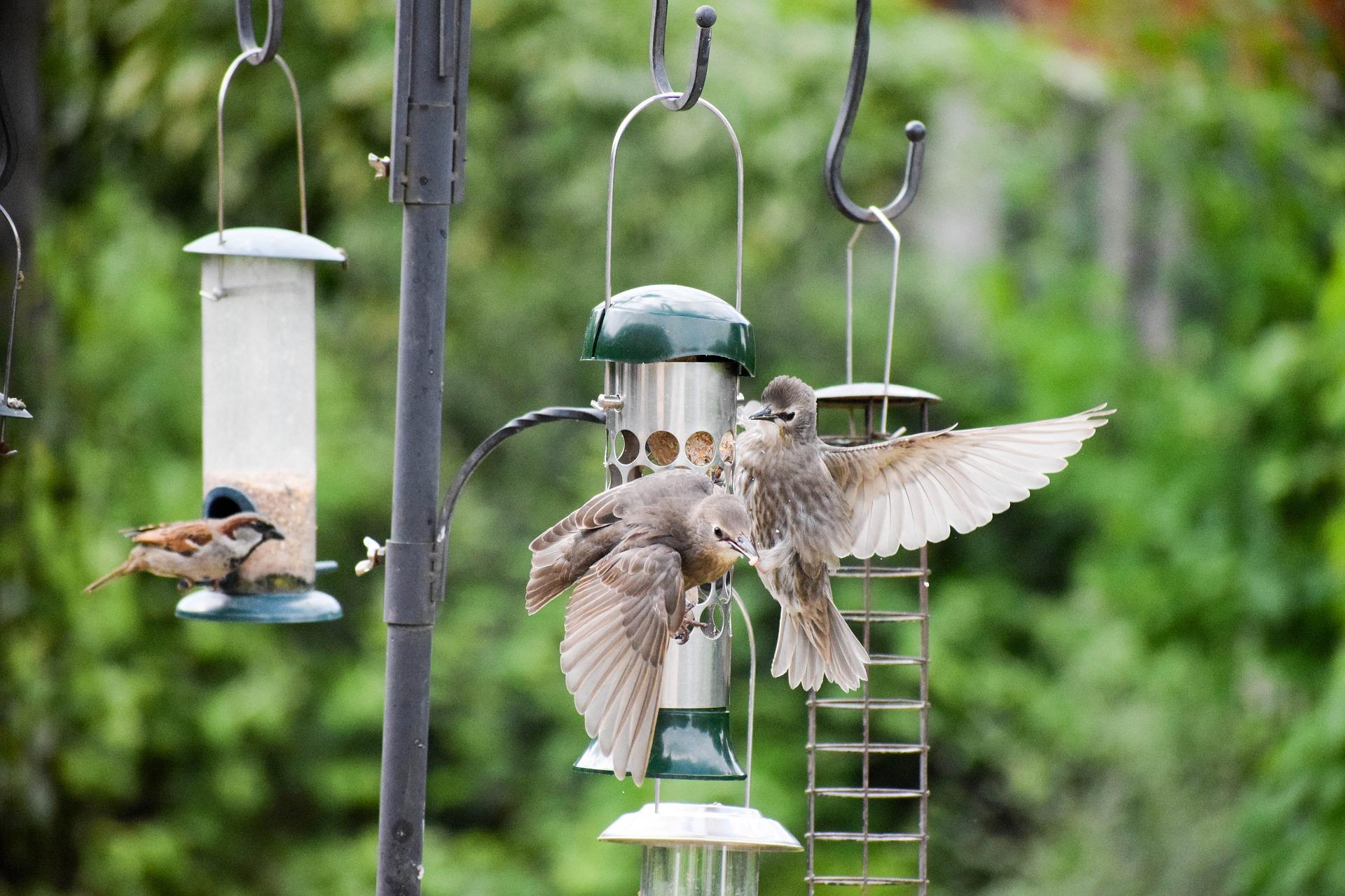 Feeding those poor birds