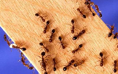 """Spring-like"" weather brings ants out of their winter slumber"