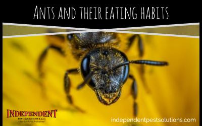 Ants and Their Eating Habits; Human Food versus Honeydew