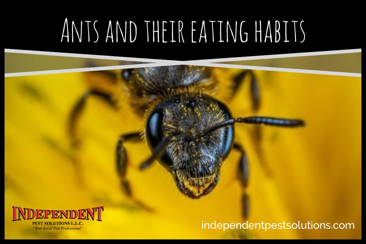 Ants and Their Eating Habits; Human Food versus Honeydew