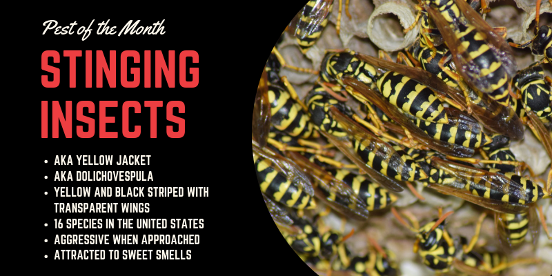 April Pest of the Month: Stinging Insects (Wasps and Hornets)